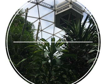 Architectural Ceiling of Rainforest Building