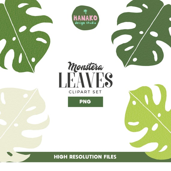 Textured Monstera Leaves Png Tropical Leaves Clipart Set Etsy Check out our tropical leaves selection for the very best in unique or custom, handmade pieces from our prints shops. textured monstera leaves png tropical leaves clipart set summer clipart bundle aesthetic png tumblr png sticker design vector