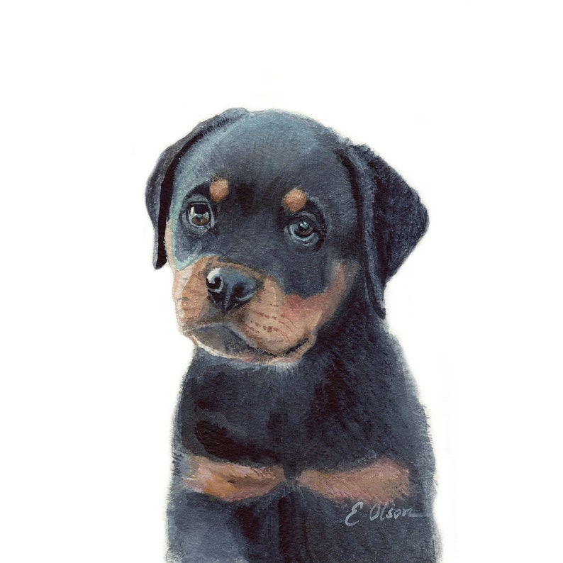 Watercolor Rottweiler Puppy Rottweiler Puppy Prints Etsy