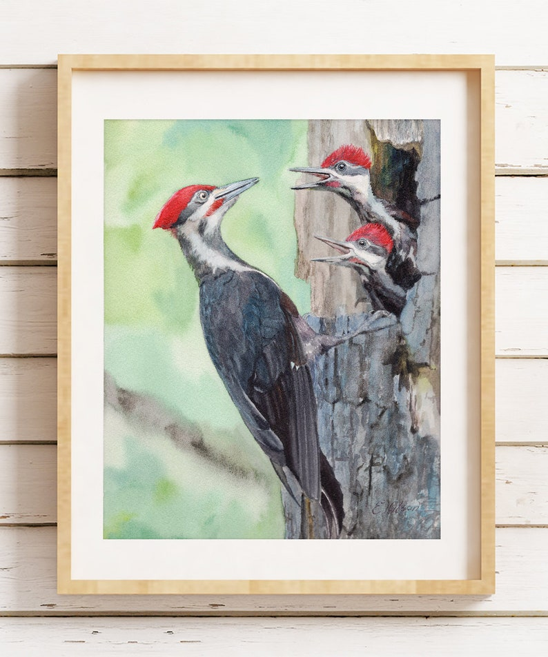 1537171232 WATERCOLOR birds Art gift Mom and baby birds Pileated