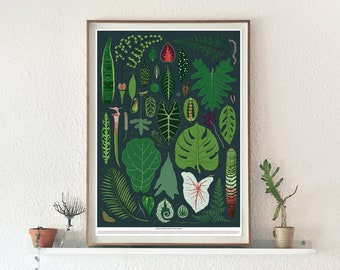 A1 Fine Art Print Exotic House Plants of the World