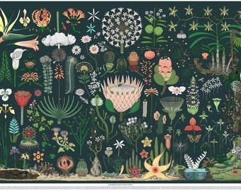 A0 Fine Art Print: Flowering Plants of South Africa