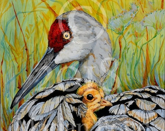 Sandhill and Chick/Crane/Chick/Floral/Wall Art