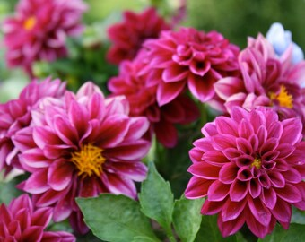 Beautiful Blooms - Blank Greeting Card, Set of 5