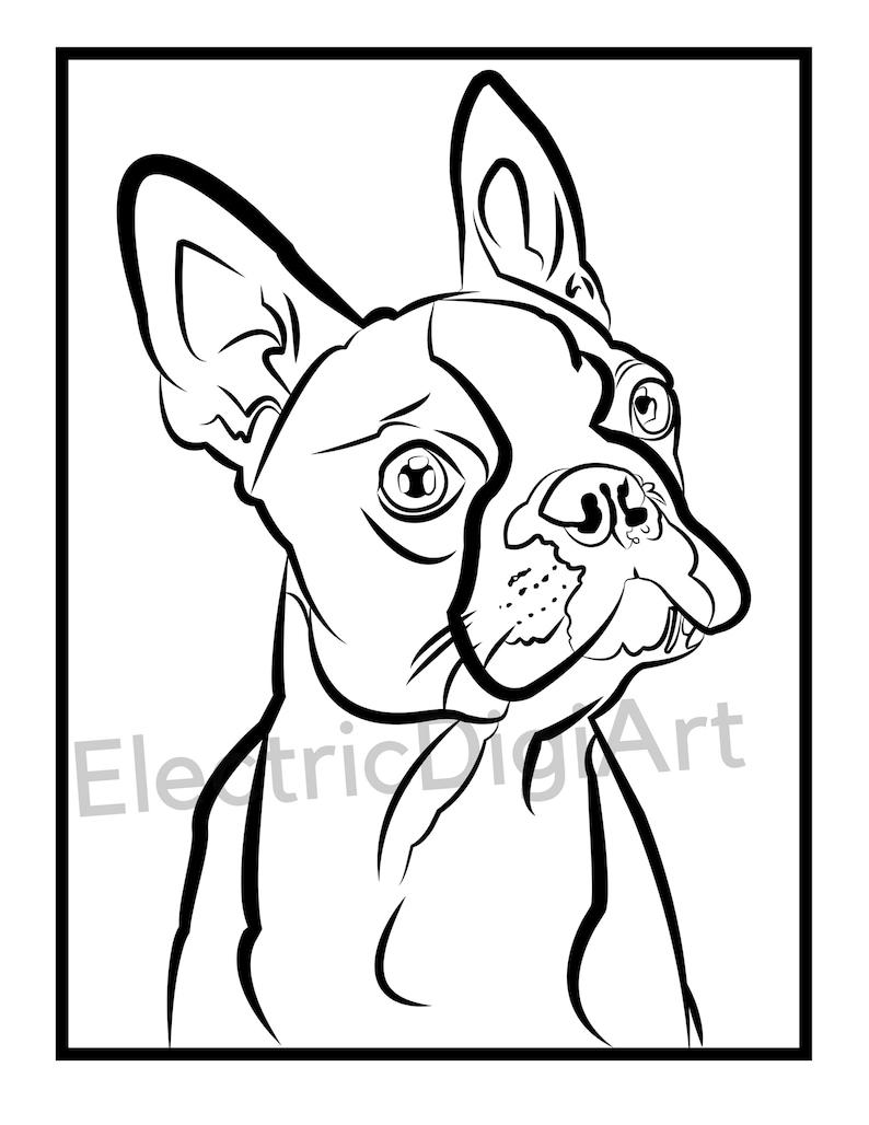 Boston Terrier Coloring Sheet   Etsy