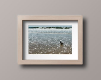 Seagull Wading Print