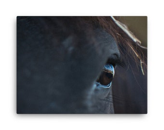 In the eyes of a Friesian Canvas