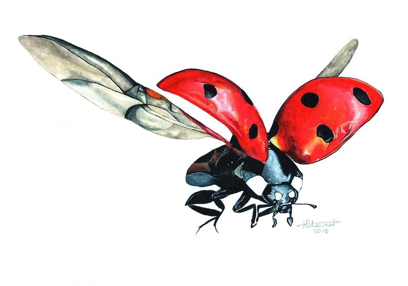 827bad46c Ladybird Ladybird Print Ladybird Painting Ladybird Artwork