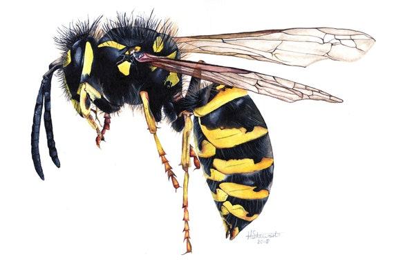 Wasp Wasp Print Wasp Painting Wasp Artwork Insect artwork | Etsy