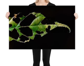 Macro Leaf Printed on Stretched Canvas or Poster Print, Wall Art Home Decor