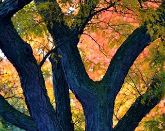 Tree Trunk Silhouette Against Orange Yellow Green Autumn Foliage Nature Photograph