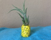 Pineapple airplant planter holder polymer clay