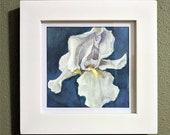 White Iris Original Watercolor Illustration, Framed