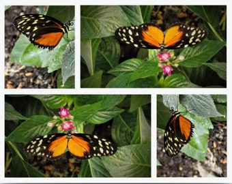 Butterfly Wow