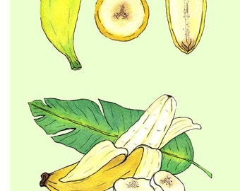 Banana | Watercolor Botanical Print | 5x7 | 8x10