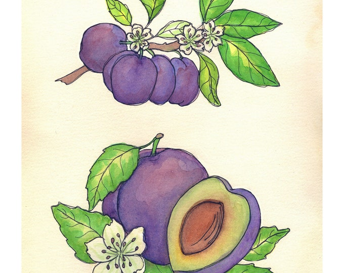 Plum | Watercolor Botanical Print | 8x10 | 5x7