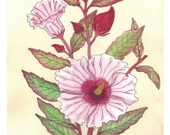 Cranberry Hibiscus | Watercolor Botanical Print | 8x10 | 5x7