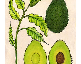 Avocado | Watercolor Botanical Print | 8x10 | 5x7