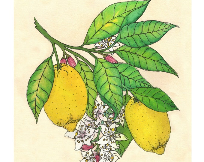 Lemon | Watercolor Botanical Print | 8x10 | 5x7