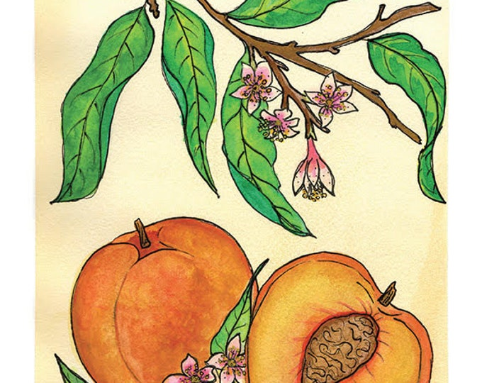 Peach | Watercolor Botanical Print | 8x10 | 5x7