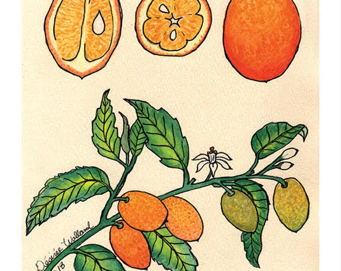 Kumquat Fruit | Watercolor Botanical Print | 8x10 | 5x7