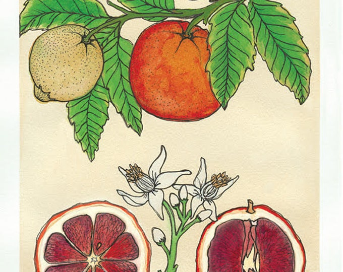 Blood Orange | Watercolor Botanical Print | 5x7 | 8x10