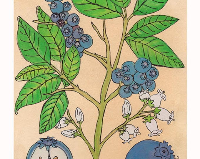 Blueberries | Watercolor Botanical Print | 8x10 | 5x7