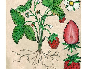 Strawberry | Watercolor Botanical Print | 8x10 | 5x7
