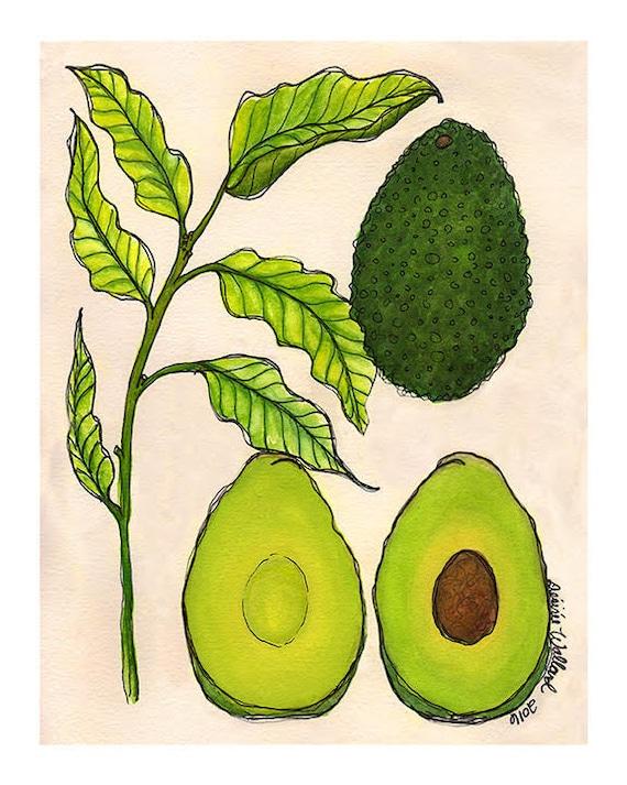 Avocado | Watercolor Botanical Print | 8x10 | 5x7