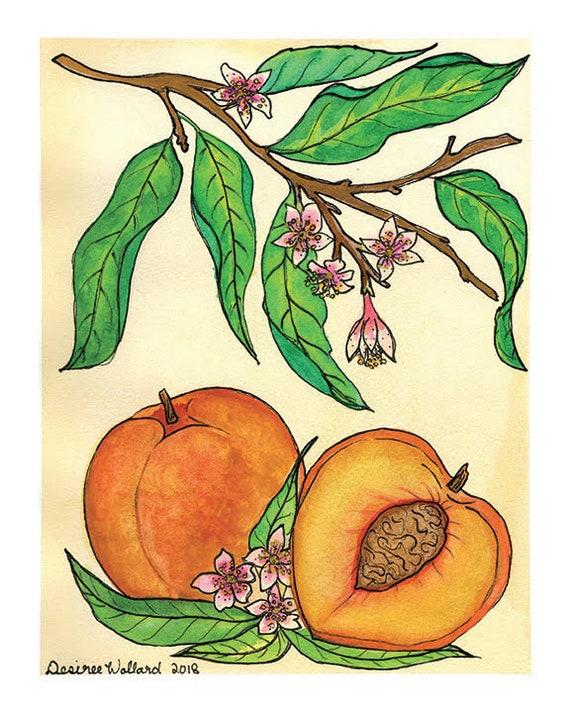 Peach | Watercolor Botanical Print | 8x10 | 5x7