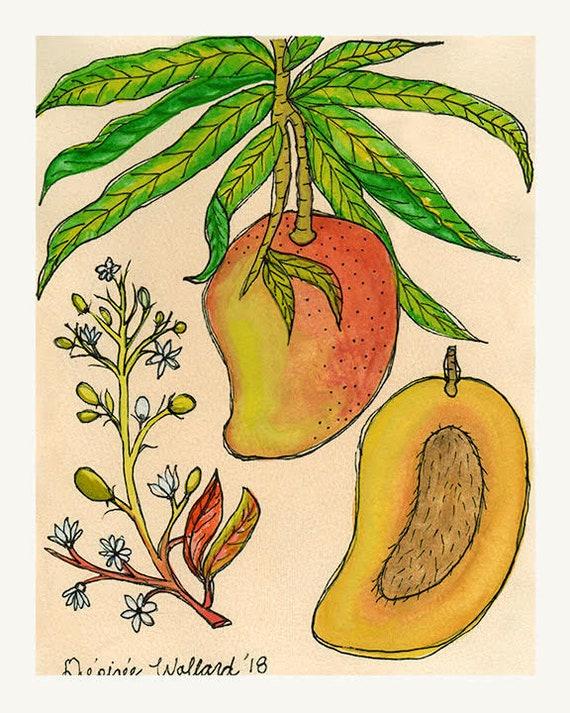 Mango | Watercolor Botanical Print | 8x10 | 5x7