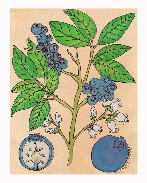 Blueberries | Watercolor Botanical Print | 8x10 | 5x7