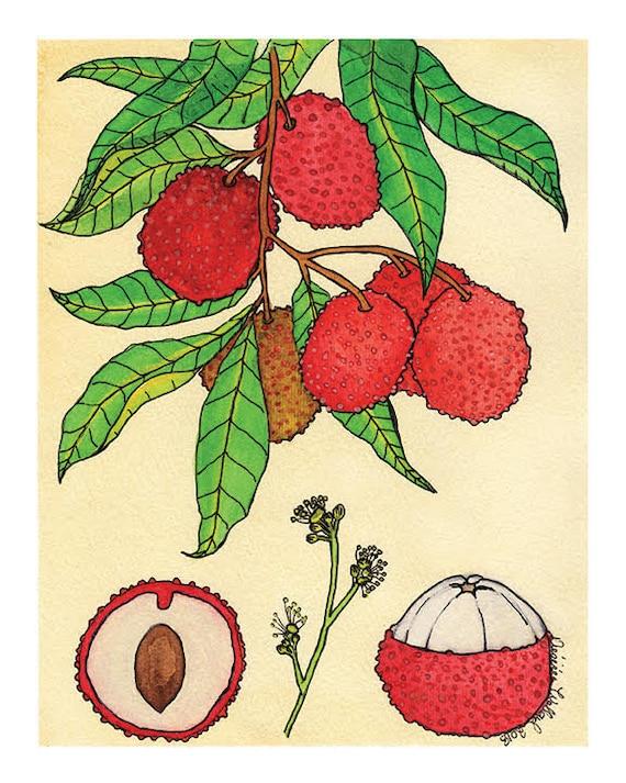 Lychee | Watercolor Botanical Print | 8x10 | 5x7