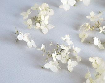 White hydrangea flowers. Set of 5 pcs