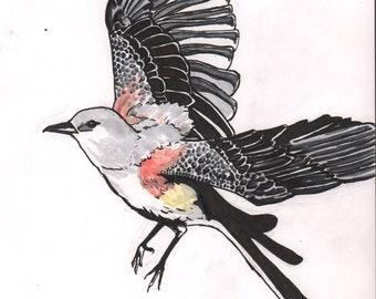 Scissor Tail Flycatcher Flight Over-wing