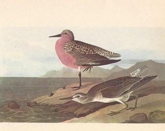 Green Sandpiper /& Wood Sandpiper 1867 Book Plate CLXVI Morris Antique Birds Egg Print
