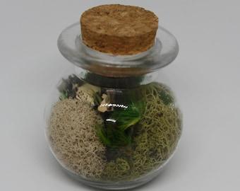 Mini Moss Terrarium