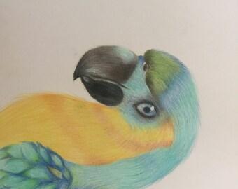 A parrots look