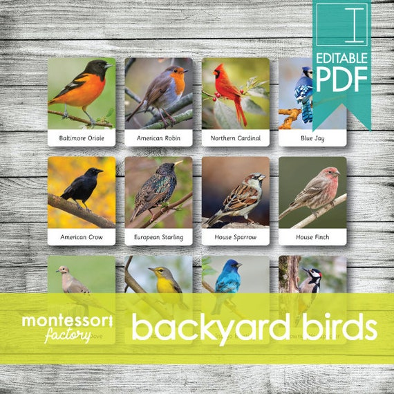 BACKYARD BIRDS  Montessori Cards  Flash Cards  Three Part