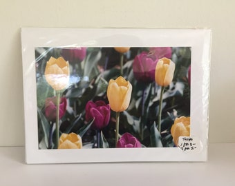 Yellow and Pink Tulips Notecard