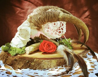 Skull decorated sheep skull