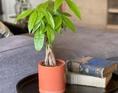 Braided Money Tree in a Ceramic Pot (Potted Plant)