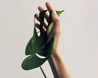 Leafy Print