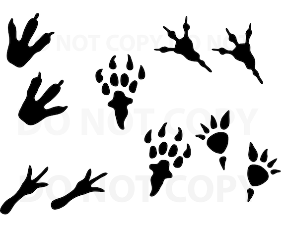 Dinosaur Footprint Svg Bundle Svg File For Cricut Design Etsy