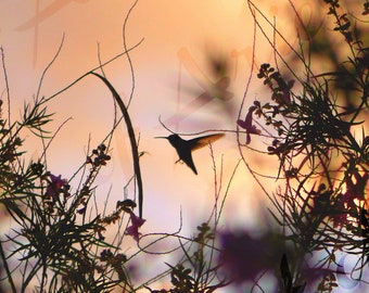 Hummingbird Photo on Canvas