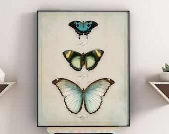 Butterfly Curio Original Print No. #2