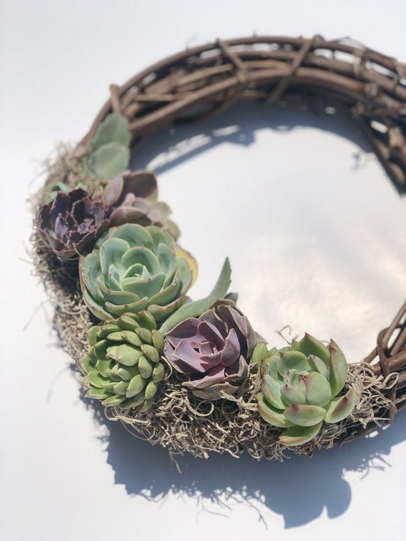 12 Colorful Living Succulent Wreath Celebration Of New Etsy