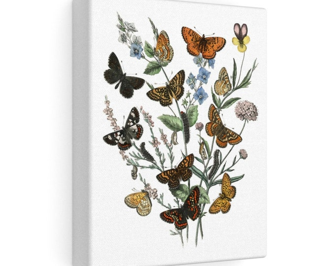 Vintage Butterflies Stretched Canvas Print