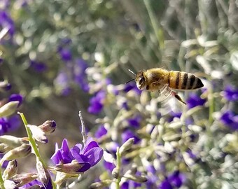 "Bee ""Eye Contact"" Photo shot in the California Desert"