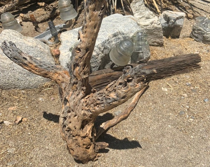 Large Raw natural cholla cactus wood, cholla skeleton from around Joshua Tree California. Free Shipping